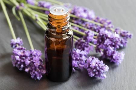 Les huiles essentielles de lavande assimilées à des perturbateurs endocriniens
